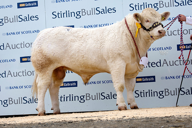 Top Price 7,000gns Balthayock Influence