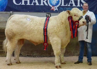 The supreme and male champion Coolnaslee Jenson sold for 5,600gns