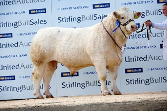 Craigieford International 5,000gns