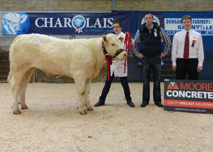 Female Champion Tonaghmore Jasmine