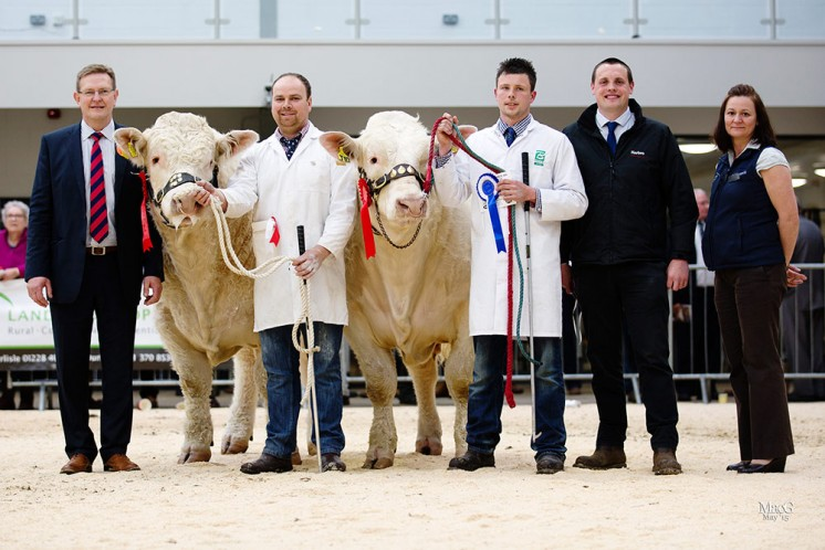 Left to right, Chris Curry, Tudur Edwards with the junior champion Maerdy Jamaica, Dane Ivison with Balmyle Jasper, the reserve junior champion, Murray Smith and Carol Rickerby