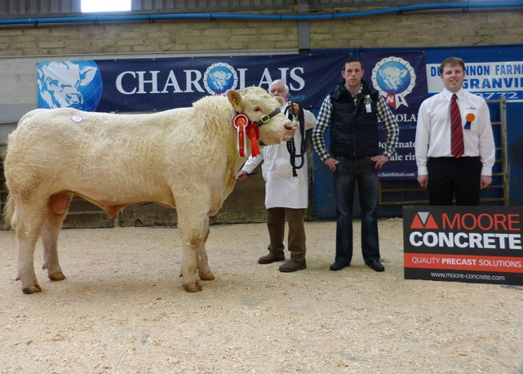Junior Male Champion Coolnaslee Josh 4,000gns