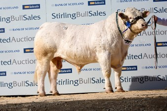 Lawersbridge Inferno 4,000gns