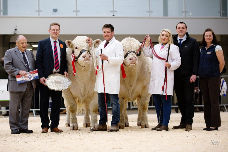 Left to right, President Mervyn Parker, judge Chris Curry, Neil Blyth with the supreme senior champion Marwood Intrepid, Eimear McGovern with the reserve senior and reserve supreme champion Ratoary Irishman, Murray Smith (Harbro) and Carol Rickerby (In-Livestock)