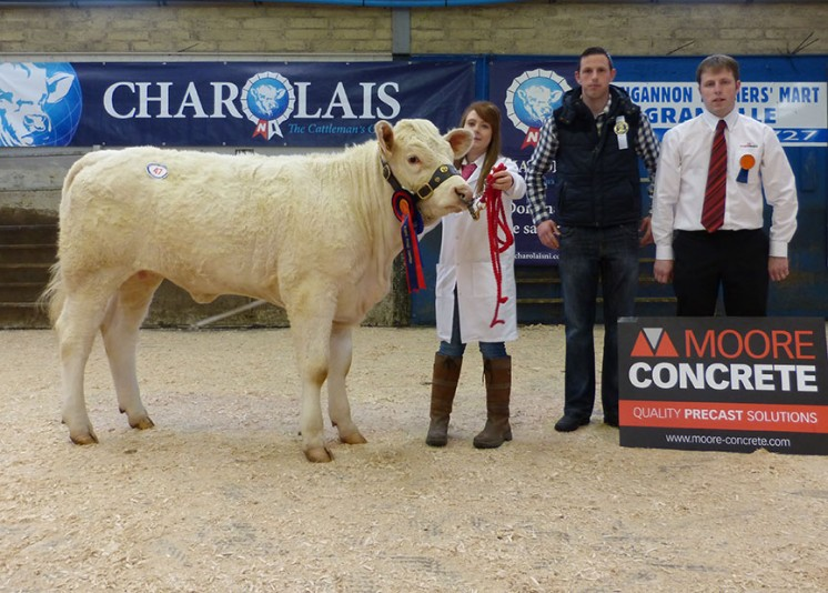 Reserve Female Champion Tonaghmore Juliet