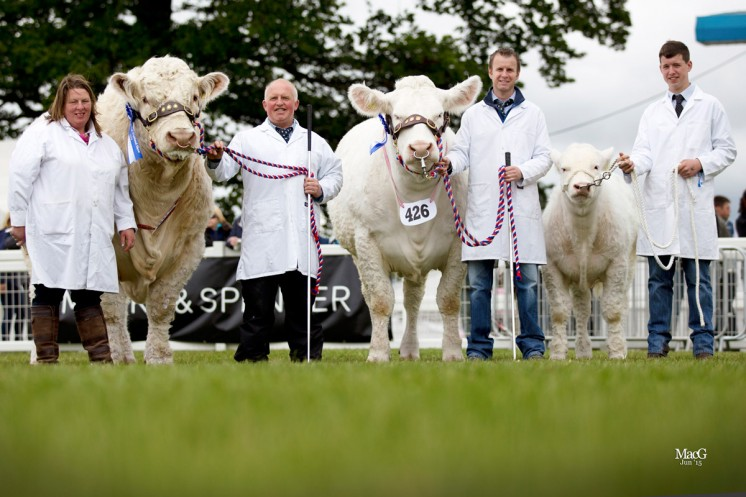 Reserve Interbreed Pairs Competition Balthayock Imp – Major DFWH & NR Walter Glenericht Hester – Messrs WK & P Drysdale