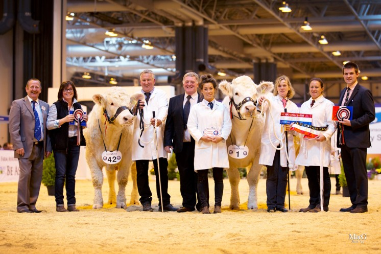 Left to right: BCCS Chairman Steve Nesbitt, Teresa Wilson, Wil Owen with the champion bull Deunawd Jeff, judge Brian McAllister, Natasha Beech, Jane Haw with the supreme champion Balbithan Iona, Julie brooks and Melton Mowbray Market Sponsor Tom Greenaw