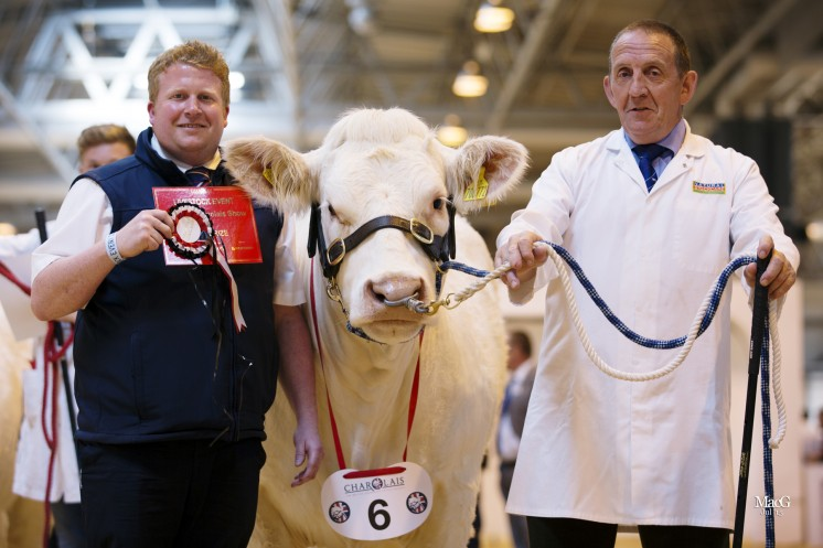 Class 2 – Gareth Scott from Cogent sponsored a class won by Newroddige Inchantress shown by Danny Wyllie