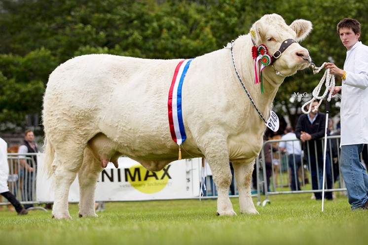 Gretnahouse Fannabel (Mr KJ Thomas) Supreme Champion and Female Champion