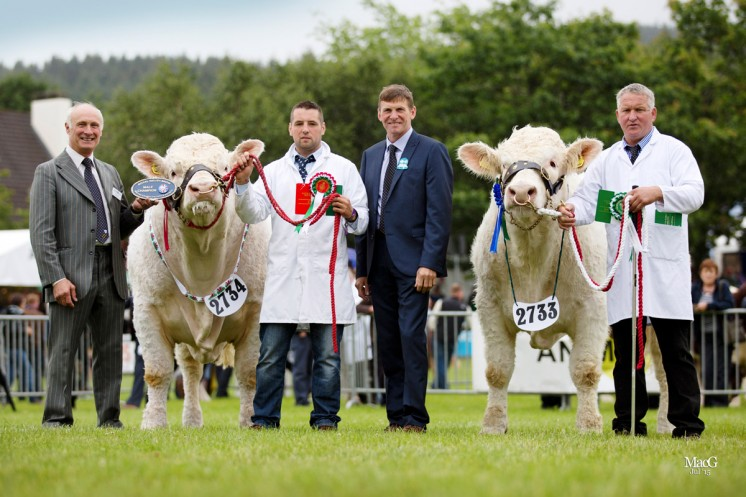 THE MALE CHAMPION BCCS President Cyril Millar congratulated Medwyn Williams on his male championship win with Castellmawr Jacpot.  In the reserve male place was Wil Owen and Deunawd Jeff