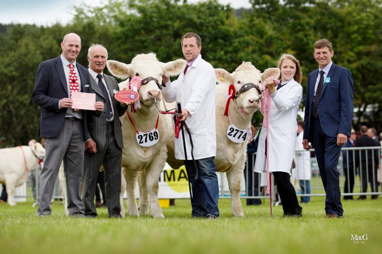 The junior heifer champions were Anthony Mould's Moulais Jamelia and Mrs SM Corbett & Daughters Teme Jello shown by Grace Corbett.