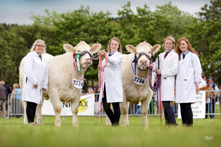 Melitta Corbett and her daughters Grace, Eva and Ruth with their heifers Teme Jello and Pedr Indigo