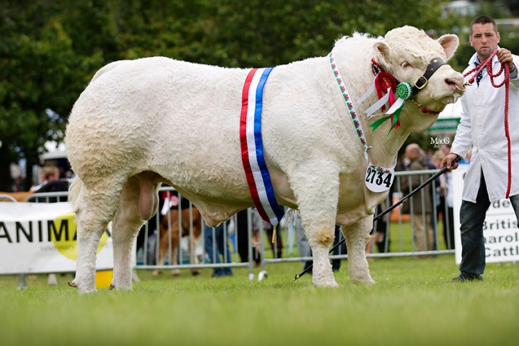 Castellmawr Jacpot (Mr A & M Williams The Reserve Supreme, Male and junior male champion