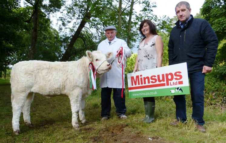 Minsups Reserve Junior Heifer Champion BRIGADOON LADY, WD & J A CONNOLLY