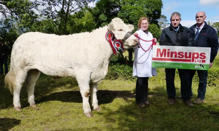 Minsups Reserve Senior Heifer Champion BRIGADOON JEMMMA, WD & J A CONNOLLY