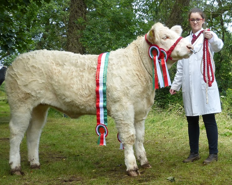 Minsups Intermediate Heifer Champion BALLYGREENAN JAGERMISTRESS, MS L BREEN