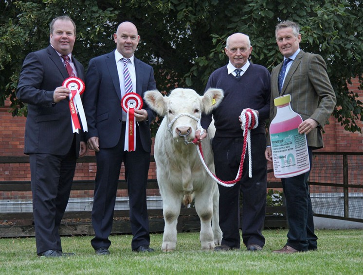 Pictured at the launch of the 2015 Pedigree Calf Fair and Beef NI Expo are, event chairman David Connolly; NI Charolais Club members Sean McGovern and Albert Connolly; with sponsor Ian Graham, MSD Animal Health.