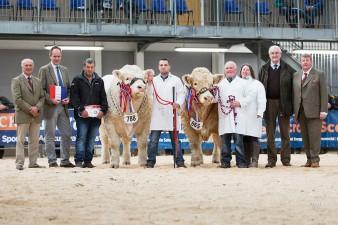 Supreme Championship Castellmawr Jacpot & Balthayock Justice