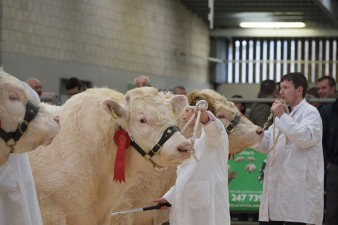 Picture Tim Scrivener 07850 303986 tim@agriphoto.com ….covering agriculture in the UK….