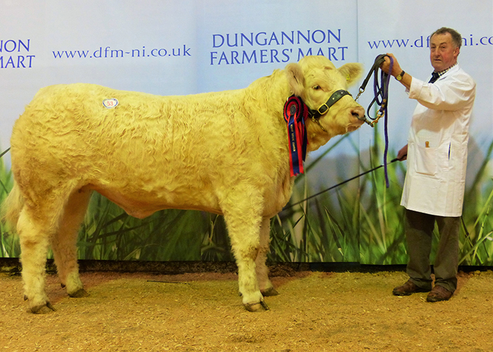 Hillviewfarm Jolene female champion at 3,200gns