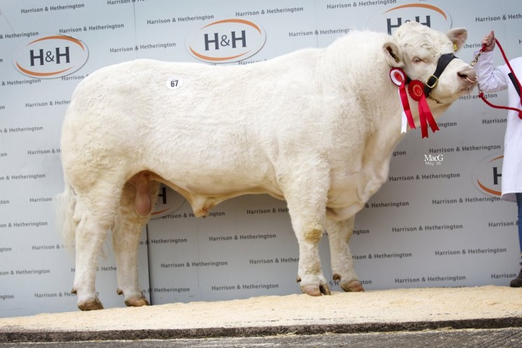 Intermediate Champion Hollywell Jura 7,000gns