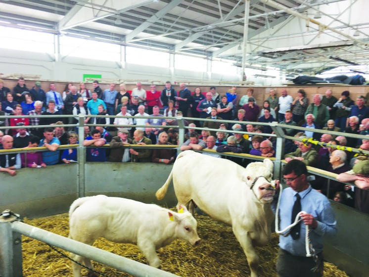 Top Price Martland Flower & Martland Mayflower 3,700gns