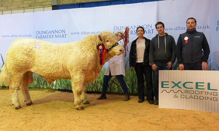 Mullinary Jethro the reserve male champion at 4,300gns