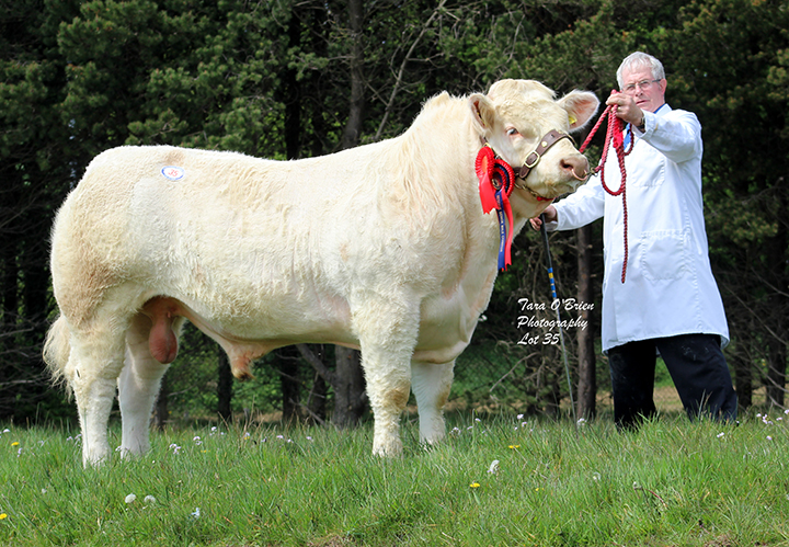 Reserve Male Champion & Top Price Drumconnis Marvel - 5,200gns