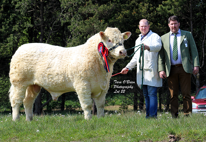Reserve Supreme & Male Champion Coolnsalee Master - 4,600gns