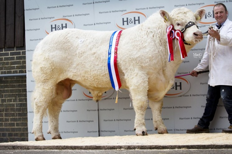 Supreme Champion Gretnahouse Jugular 8,000gns