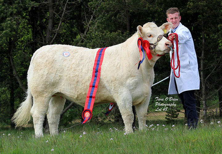 Supreme & Female Champion Derryharney Moonlight - 3,300gns