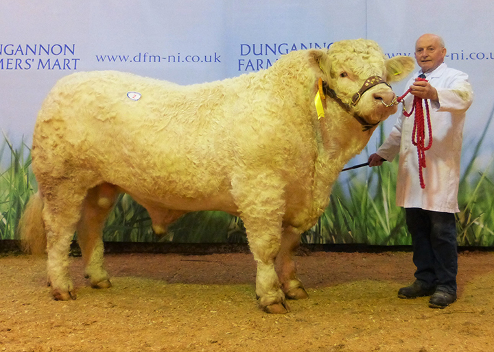 Brigadoon Jupiter at 4,000gns