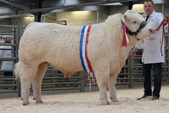 Champion Wissington Jason - 3,200gns