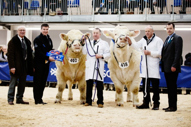 The senior champions from left to right: Cyril Millar, David Murray, Adrian Richardson with the senior champion Hillviewfarm Judge, Esmor Evans with the reserve senior champion Maerdy Jogger and Ben Harman