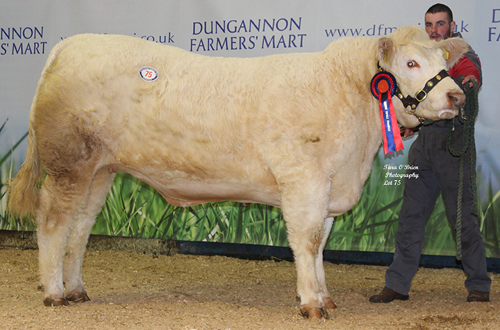 Reserve Female Champion Coolnaslee Janelle 2,500gns