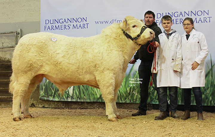 Top price Ardmachree Jack 4,800gns