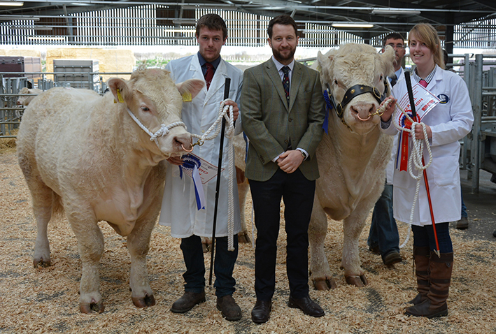 Reserve Champion Lovistone Lincoln & Champion Martland Justabout with Judge Alistair Lyle