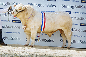 Champion Falleninch Julius 5,000gns