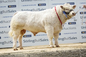Mornity Jungle 7,000gns
