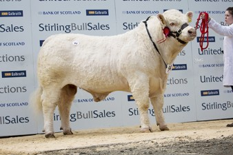 Panmure Lincoln 7,000gns