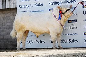 Reserve Champion Lakelady Jelle 7,200gns