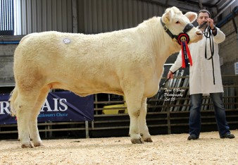 Reserve Female Champion Moorlough Jenny 2,100gns