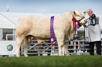 Reserve Junior Male Champion Coolnaslee Lincoln