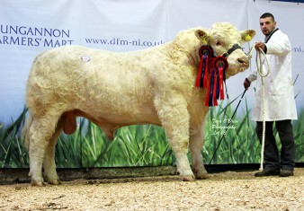 Reserve Supreme & Senior Male Champion Coolnaslee Jum 3,700gns