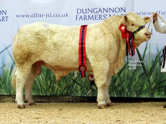 Supreme Champion Coolnaslee Lincoln 4,000gns