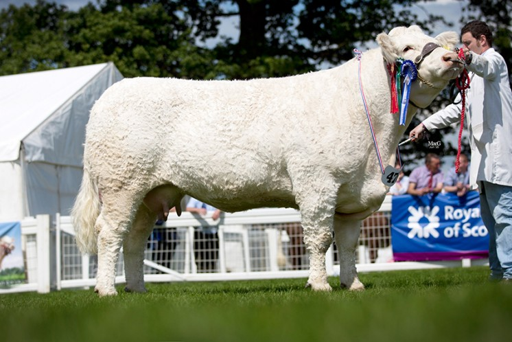 John Irvine & Sons Ballindalloch Favour was the reserve supreme champion