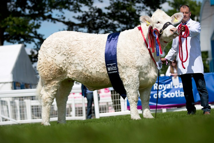 The Charolais champion was Wissington Jocasta exhibited by John and Jenny Rix