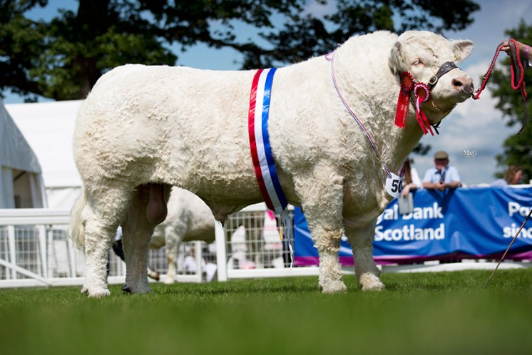 Kilbline Instigator was selected by the judge Iain Millar as the male champion