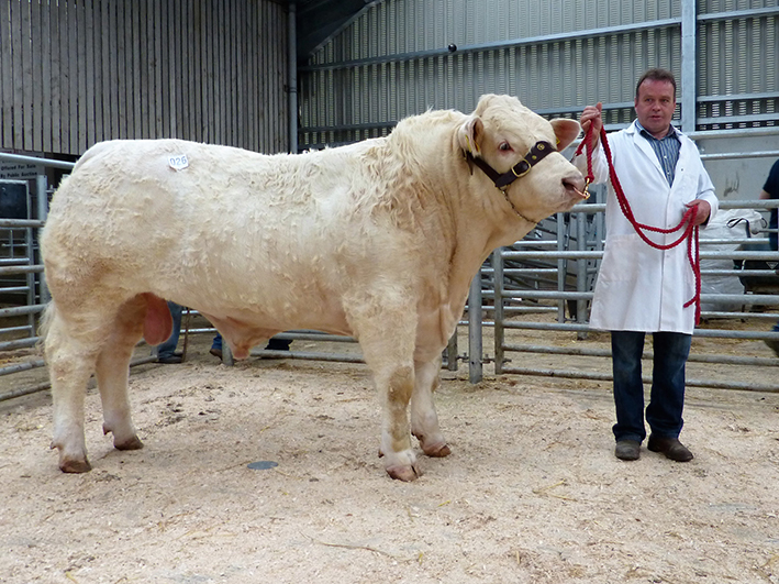 Pat Hackett with Top Priced Fury Link 3,100gns