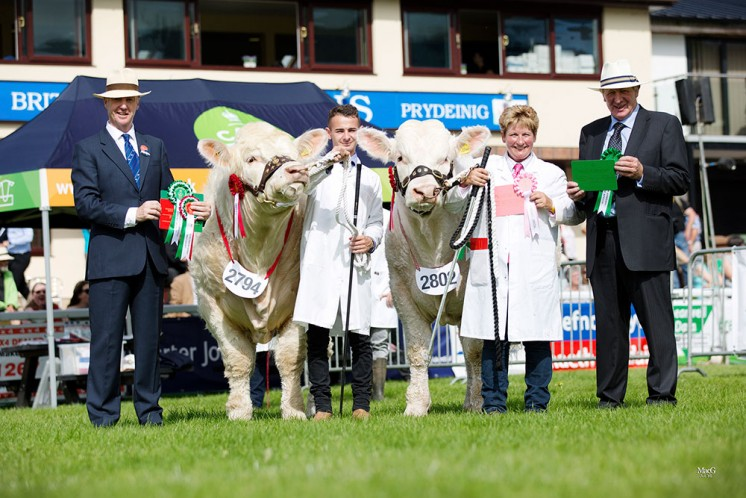 Male Champion Sportsmans Lordship and the reserve male champion Gower Lionking